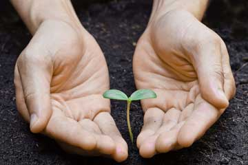 nature vs nurture: hands cupping seedling